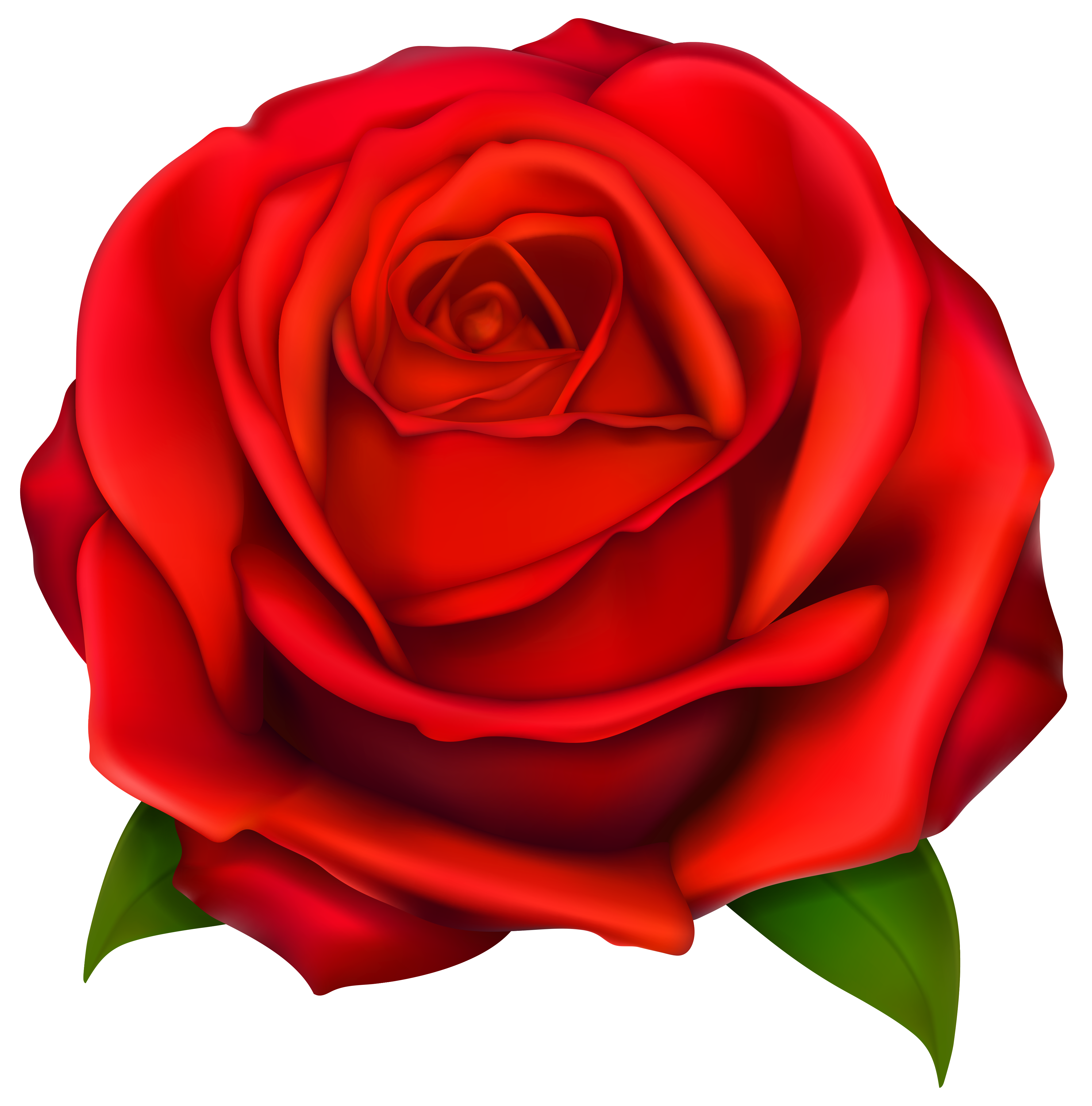 Rose clipart minimalist. Transparent red png gallery