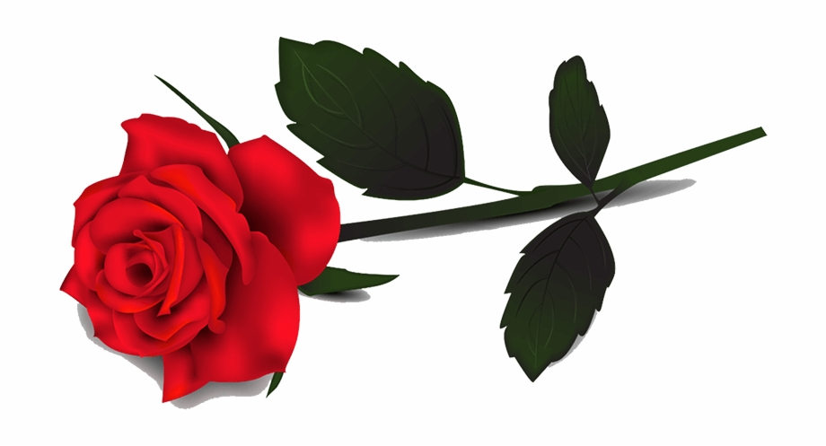 Red . Clipart rose transparent background