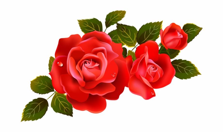 Red rosebud flower . Clipart rose transparent background