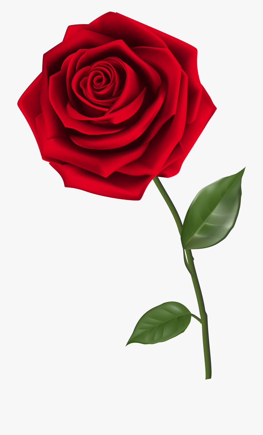 Categories rose with no. Clipart roses logo
