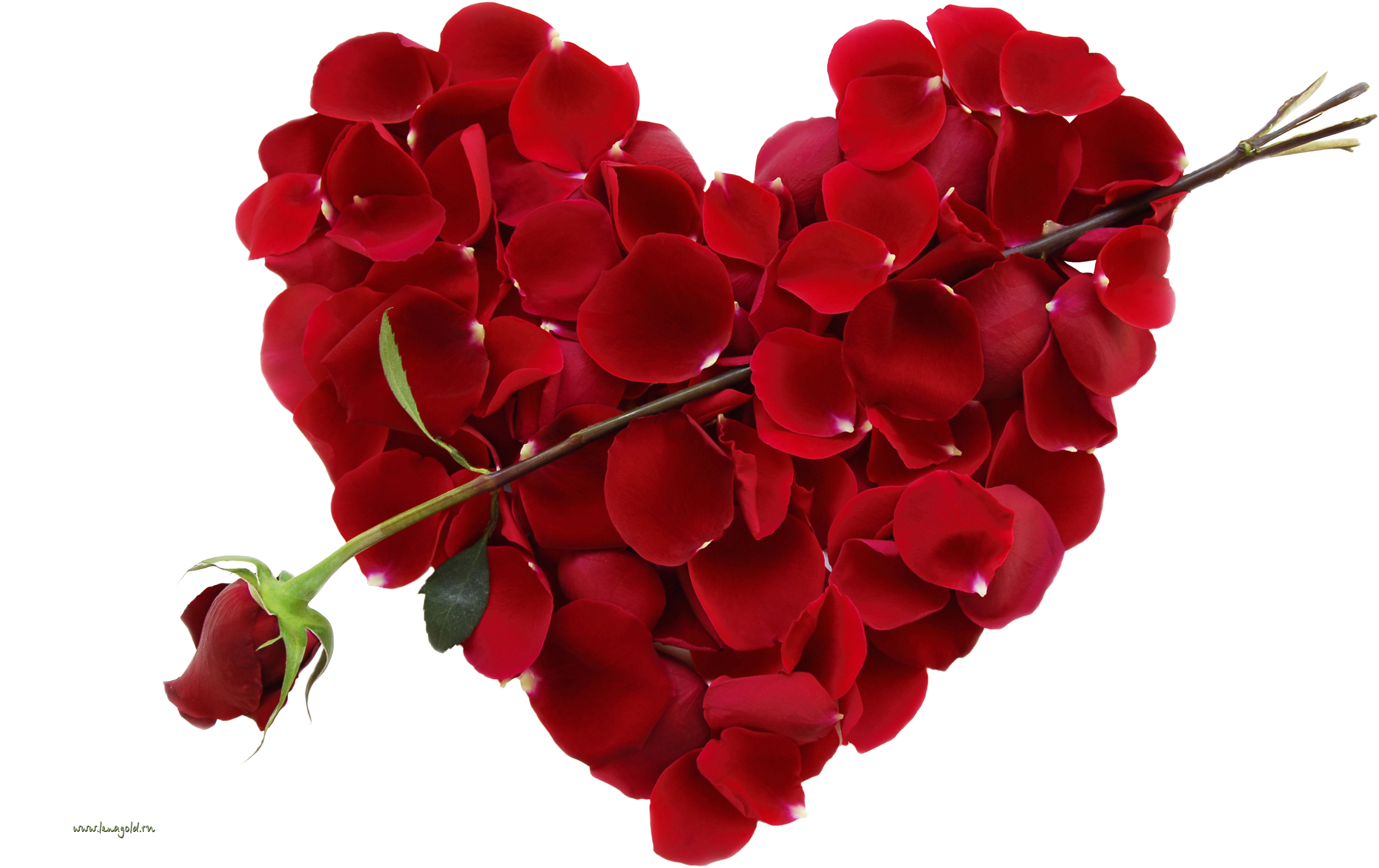 Png love day . Clipart rose valentines