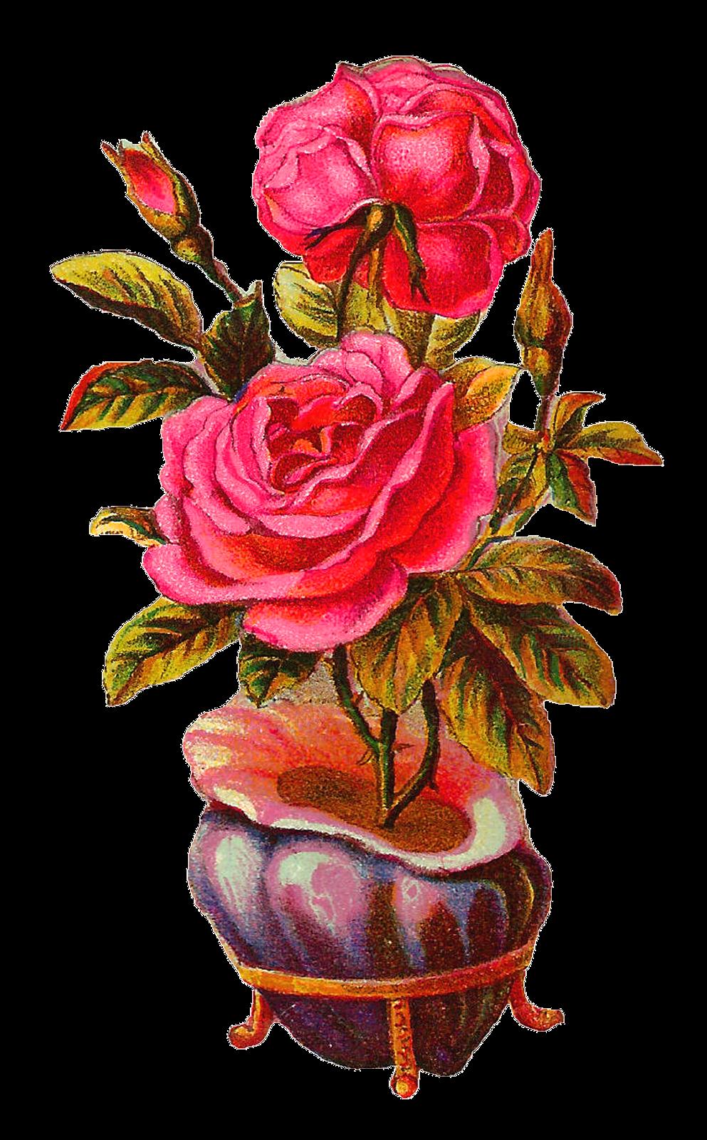 Clipart roses vase. Antique images botanical vintage