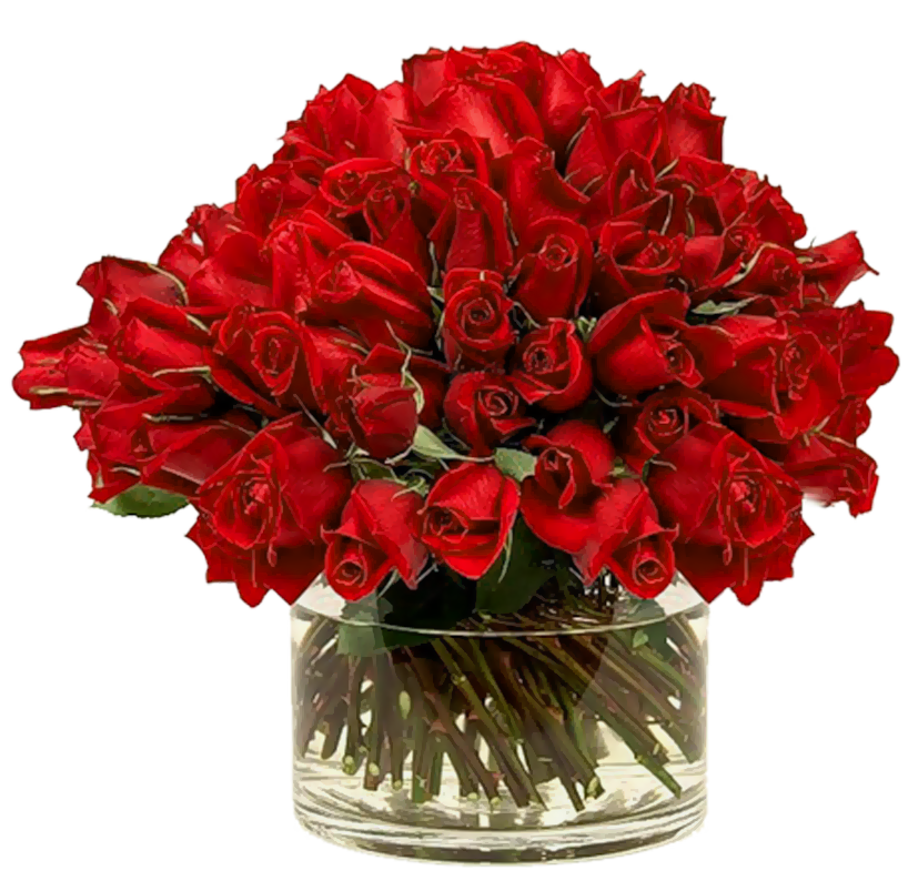 Transparent red in gallery. Clipart roses vase