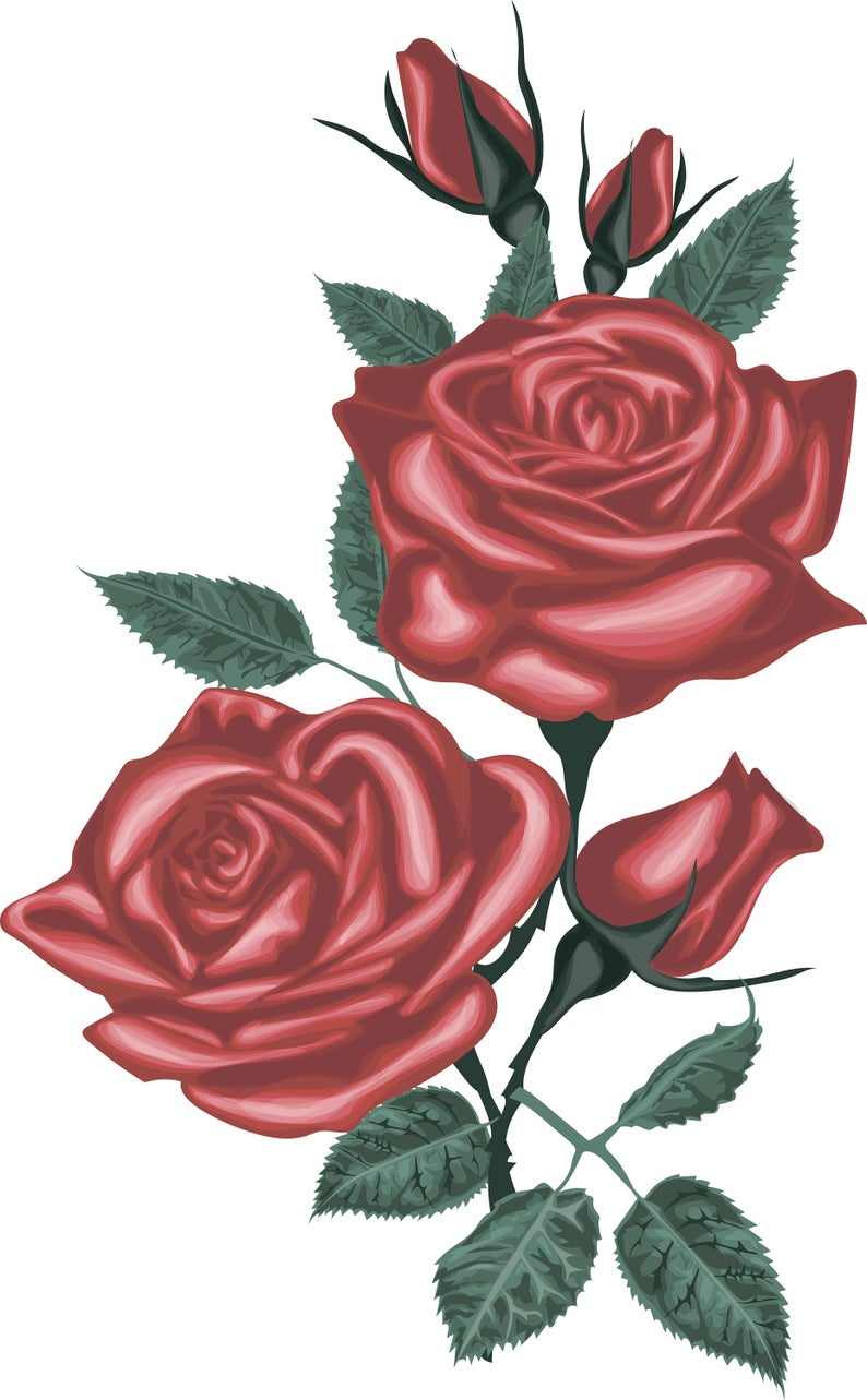 Red rose digital blossom. Clipart roses vector