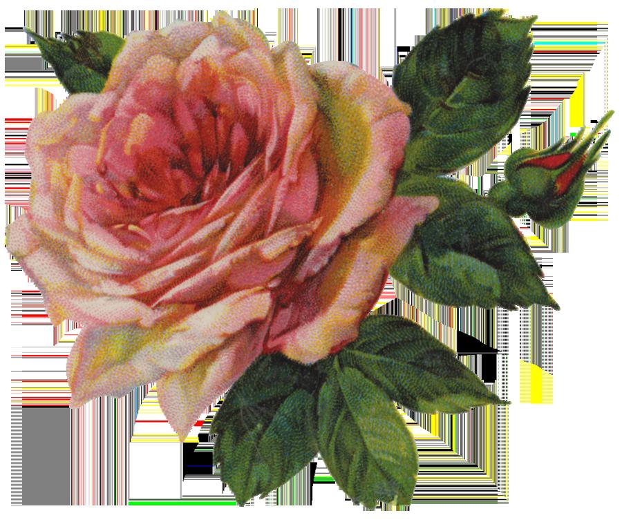 Pink bud png image. Clipart rose vintage