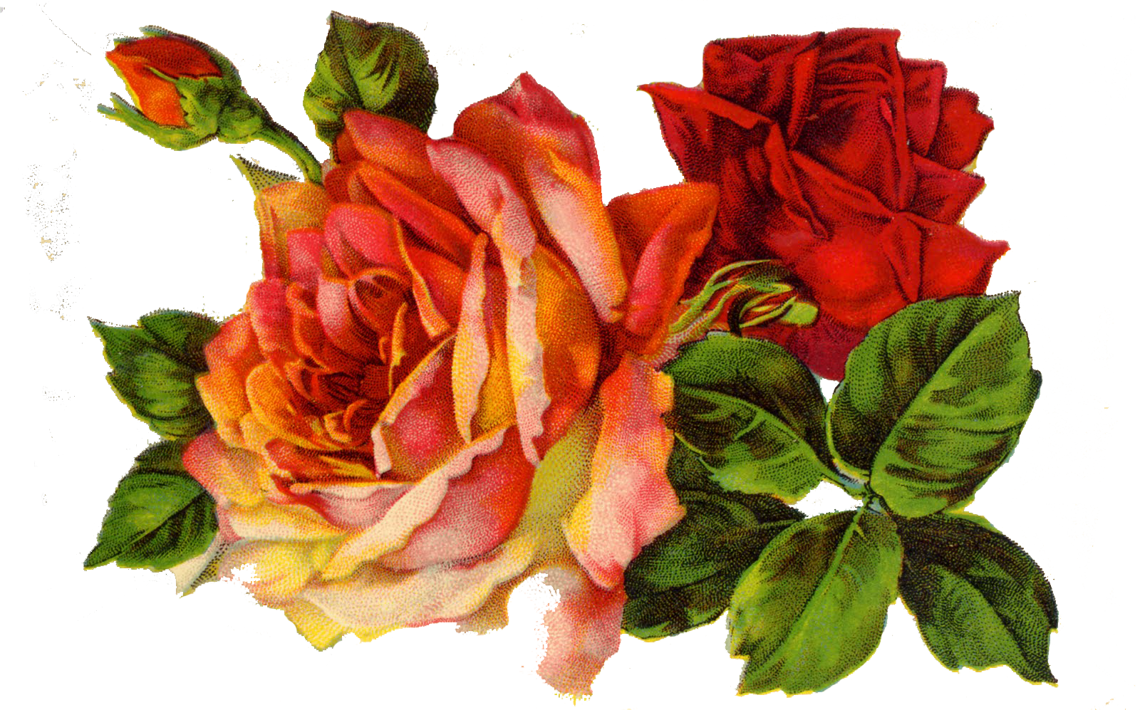 Clipart rose vintage. Bird and flowers google