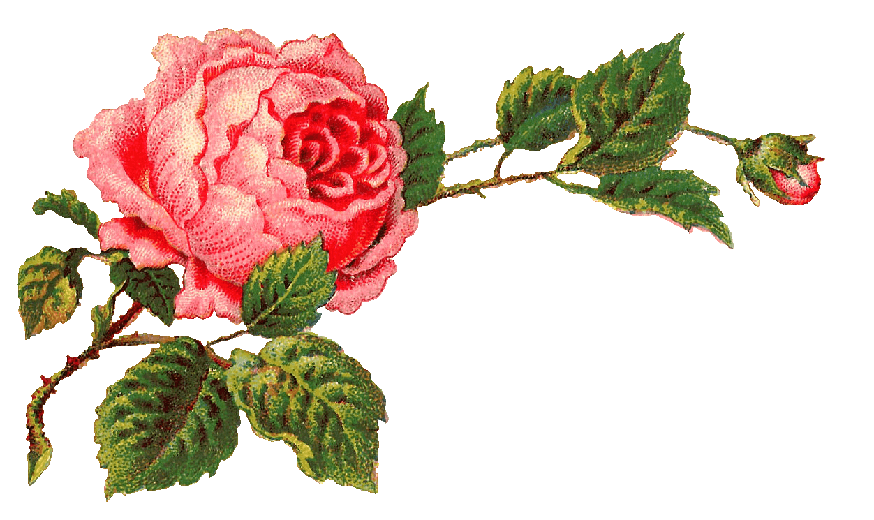 Clipart rose vintage. Victorian roses on a