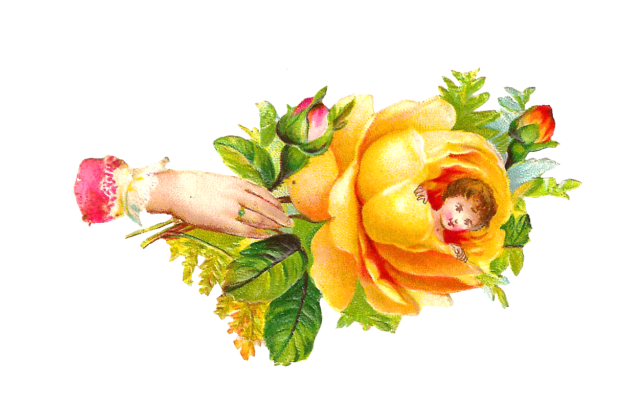 Antique images free clip. Clipart rose yellow rose