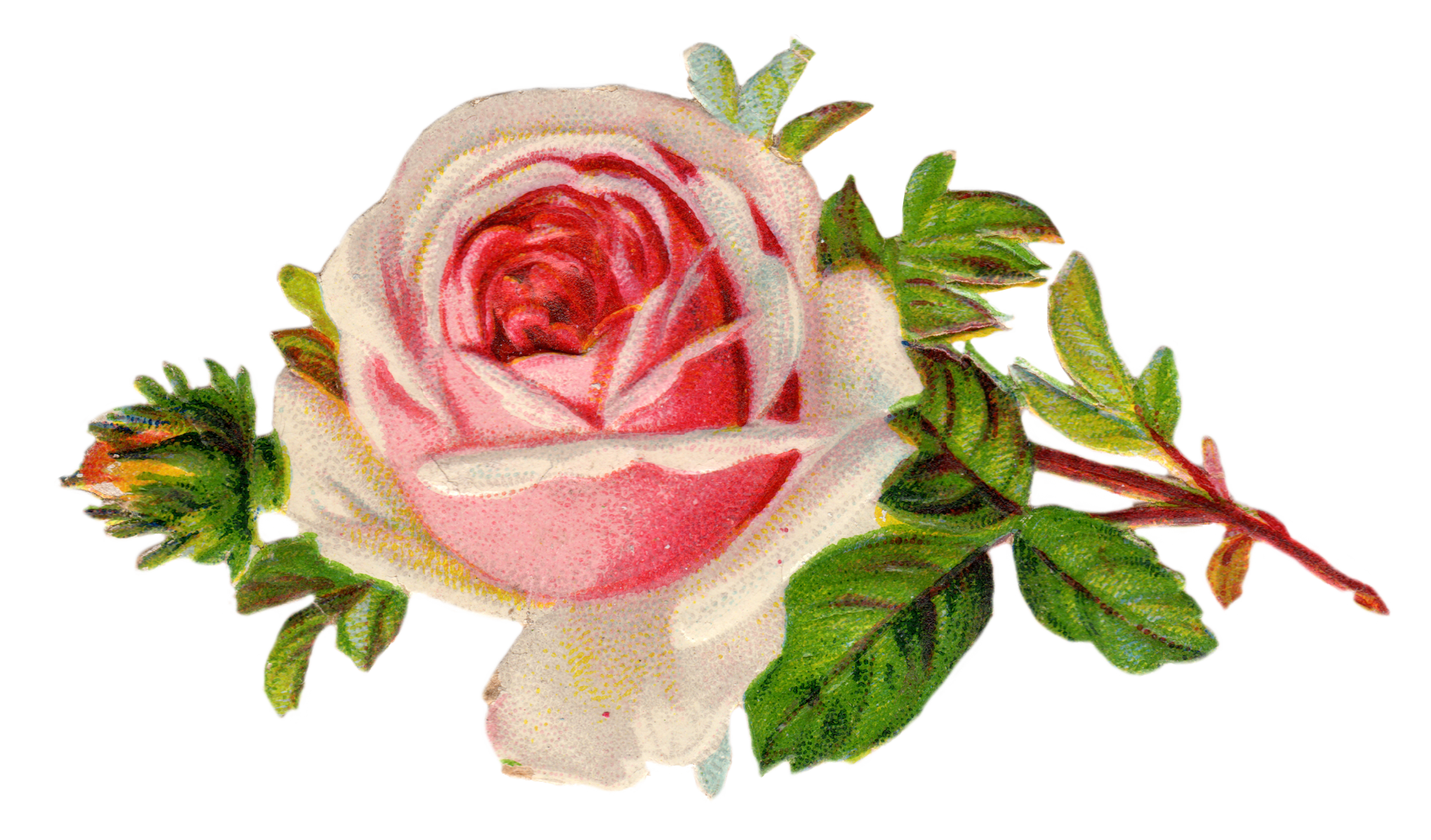 Clipart roses. Free vintage rose clip