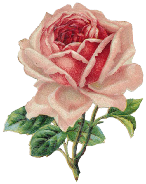 Clipart roses aesthetic. Transparent floral tumblr vintage