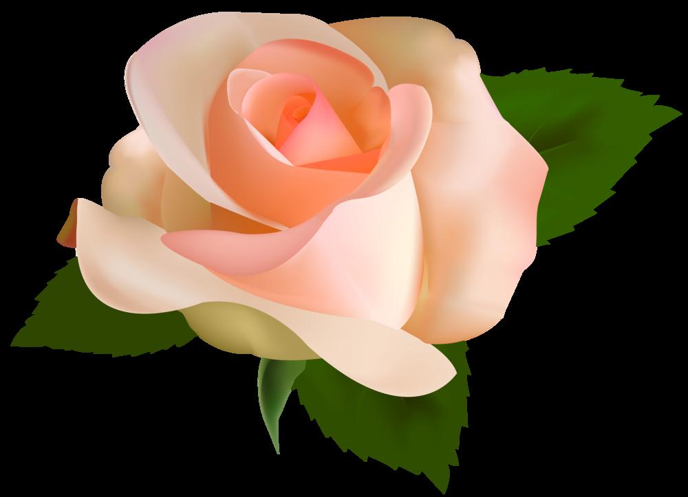 Clipart wedding rose. Beautiful png