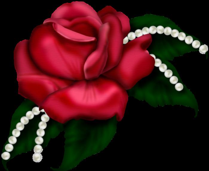 Skrot s t rose. Clipart roses bed