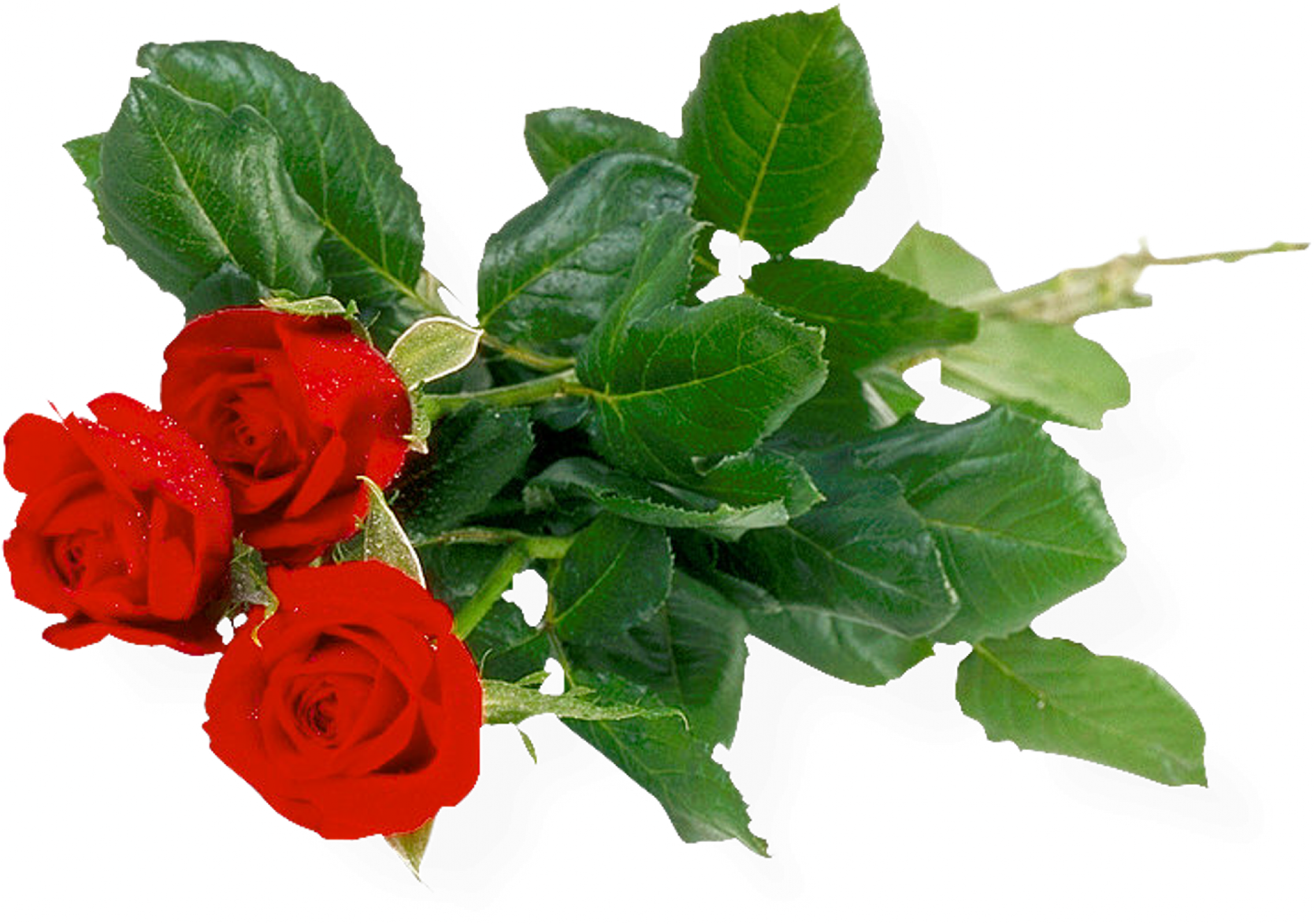 Rose flower bouquet of. Free png images download