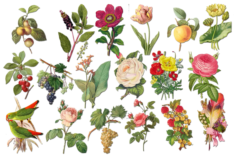 Flowers rose . Clipart roses clip art