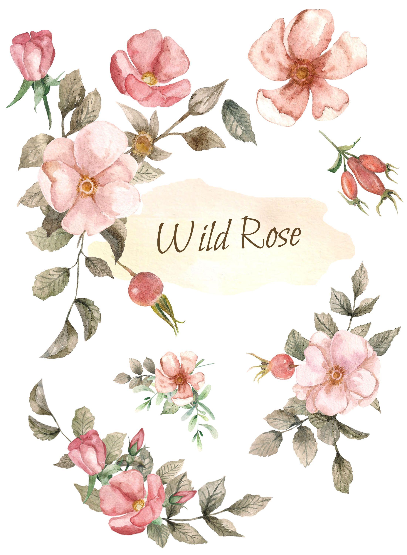 Clipart roses dog. Watercolor digital floral clip