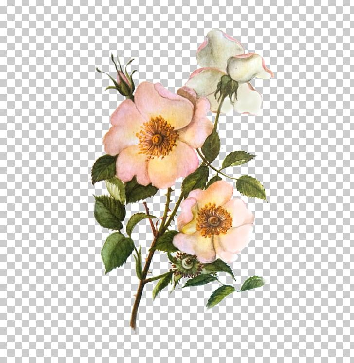Rose cabbage garden glaucous. Clipart roses dog
