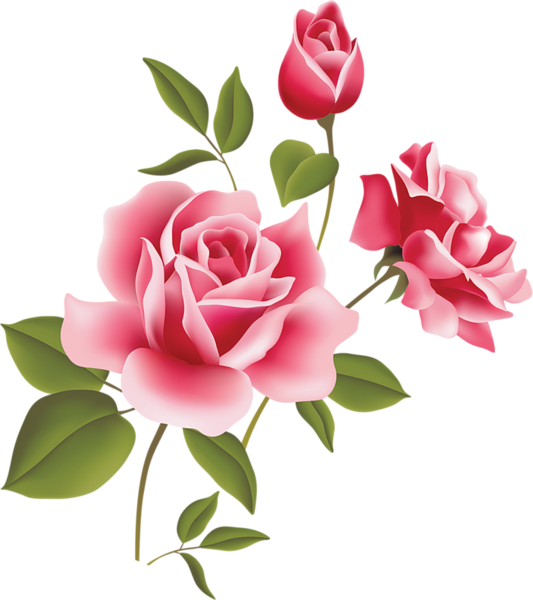 Clipart roses drawn. Vintage rose png buscar