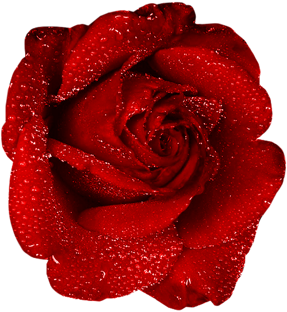 Garland clipart red rose. Flower one pencil and