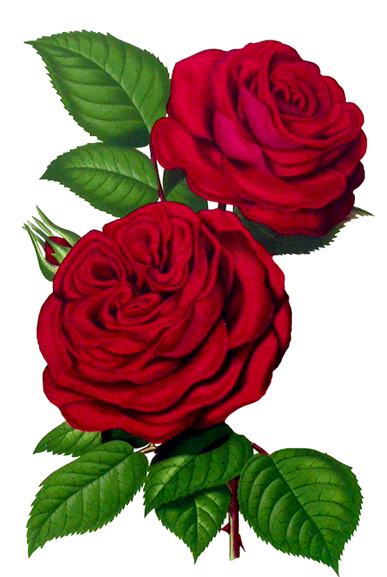 Flowers pinterest. Clipart roses embroidery