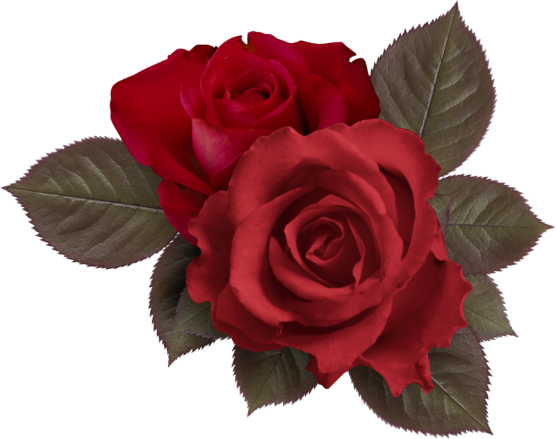 Clipart roses embroidery.  png clip art