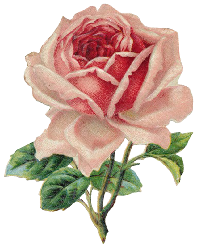 Flowers sweetly scrapped s. Clipart roses file