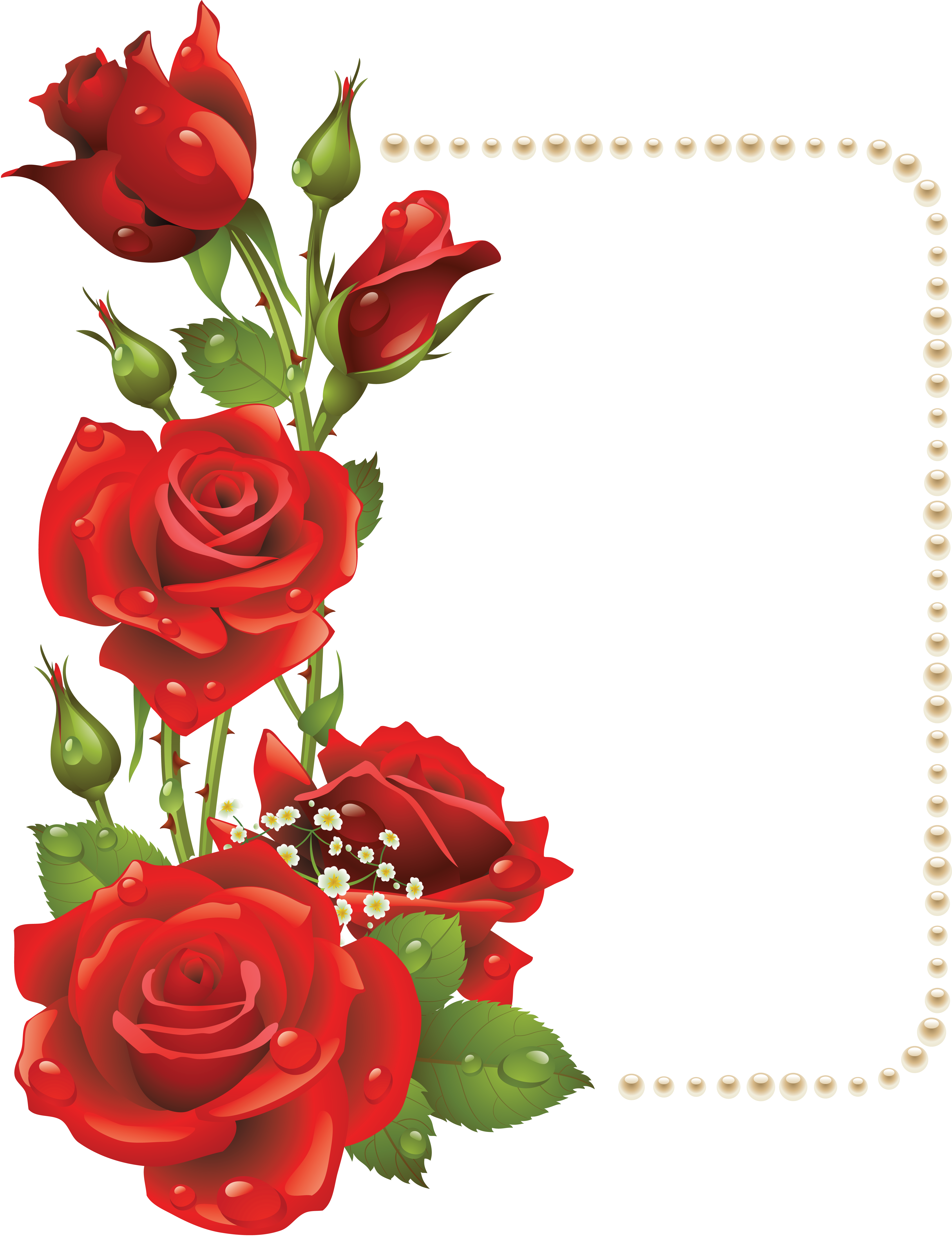 Large transparent frame with. Clipart wedding rose