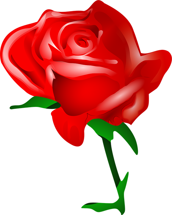 Free image on pixabay. Clipart roses head