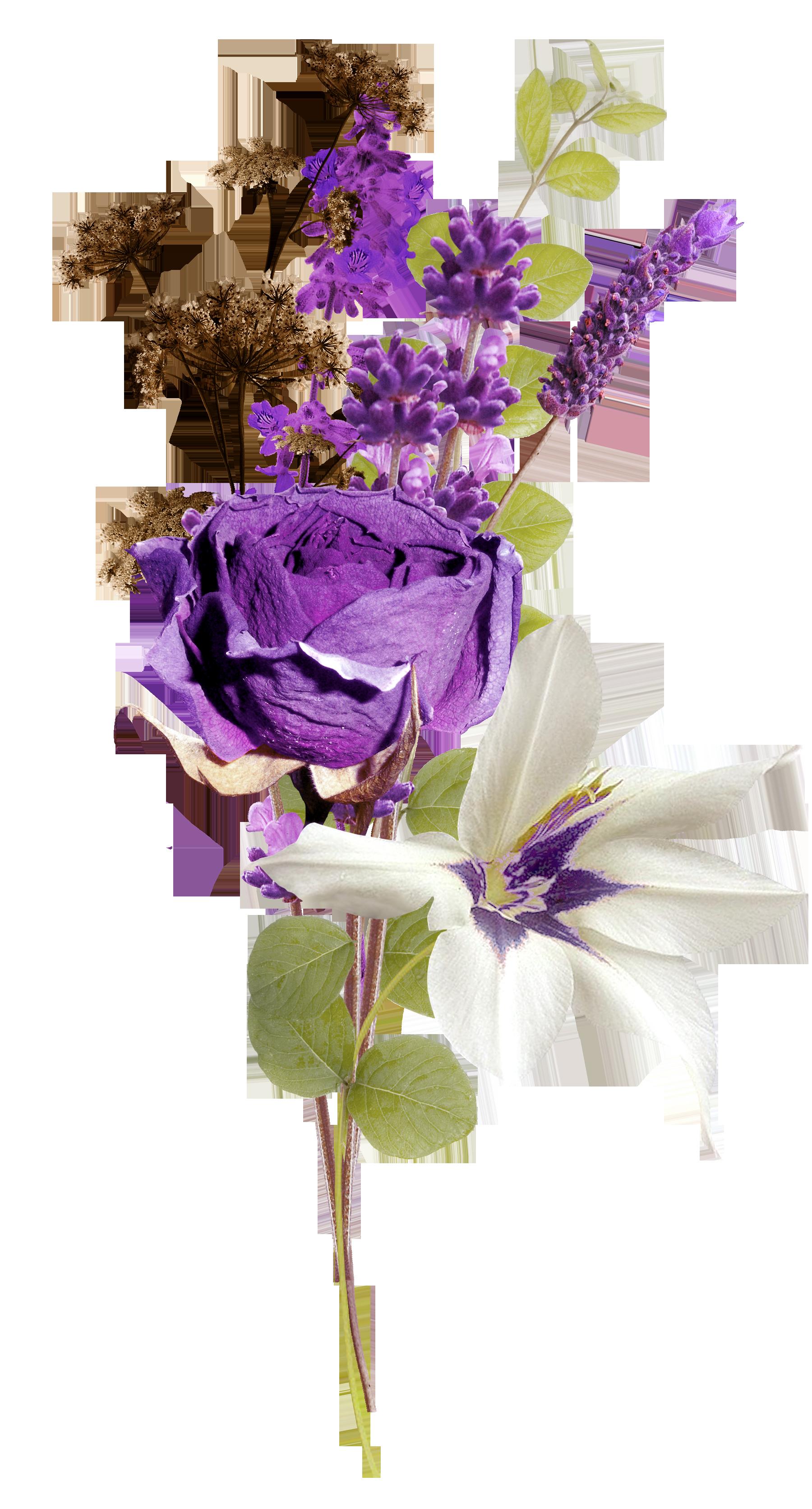 Lavender web browser clip. Clipart roses lavendar