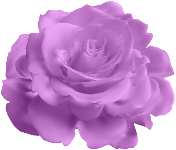 Lavender clipart lavender rose. Purple transparent clip art