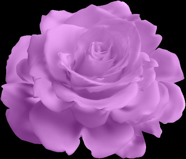 Clipart roses lavendar. Purple rose transparent clip