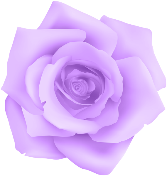 Clipart rose lavendar. Purple transparent clip art