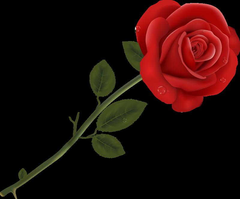 Rose clipart mini rose. Queen of flowers vector