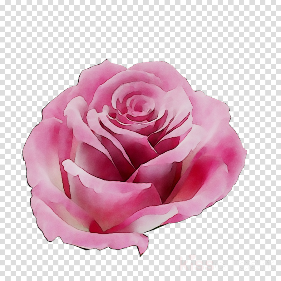 Flowers background bank finance. Clipart roses money