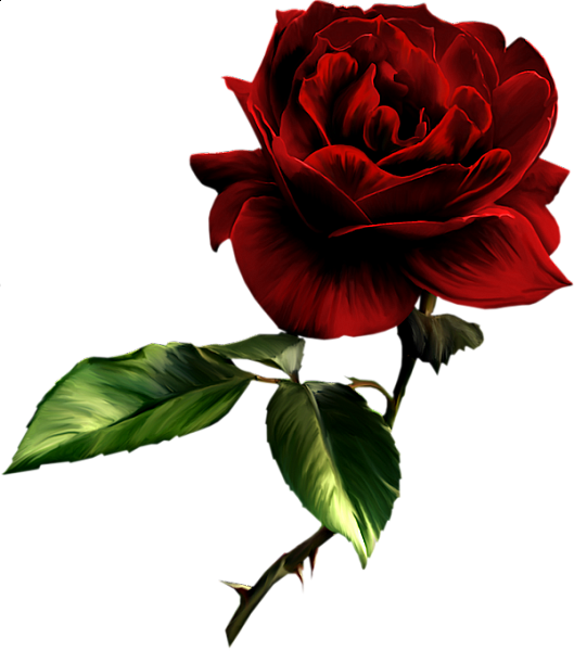 Painted red roses pinterest. Rose clipart natural
