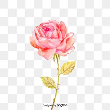 Rose download free transparent. Clipart roses money