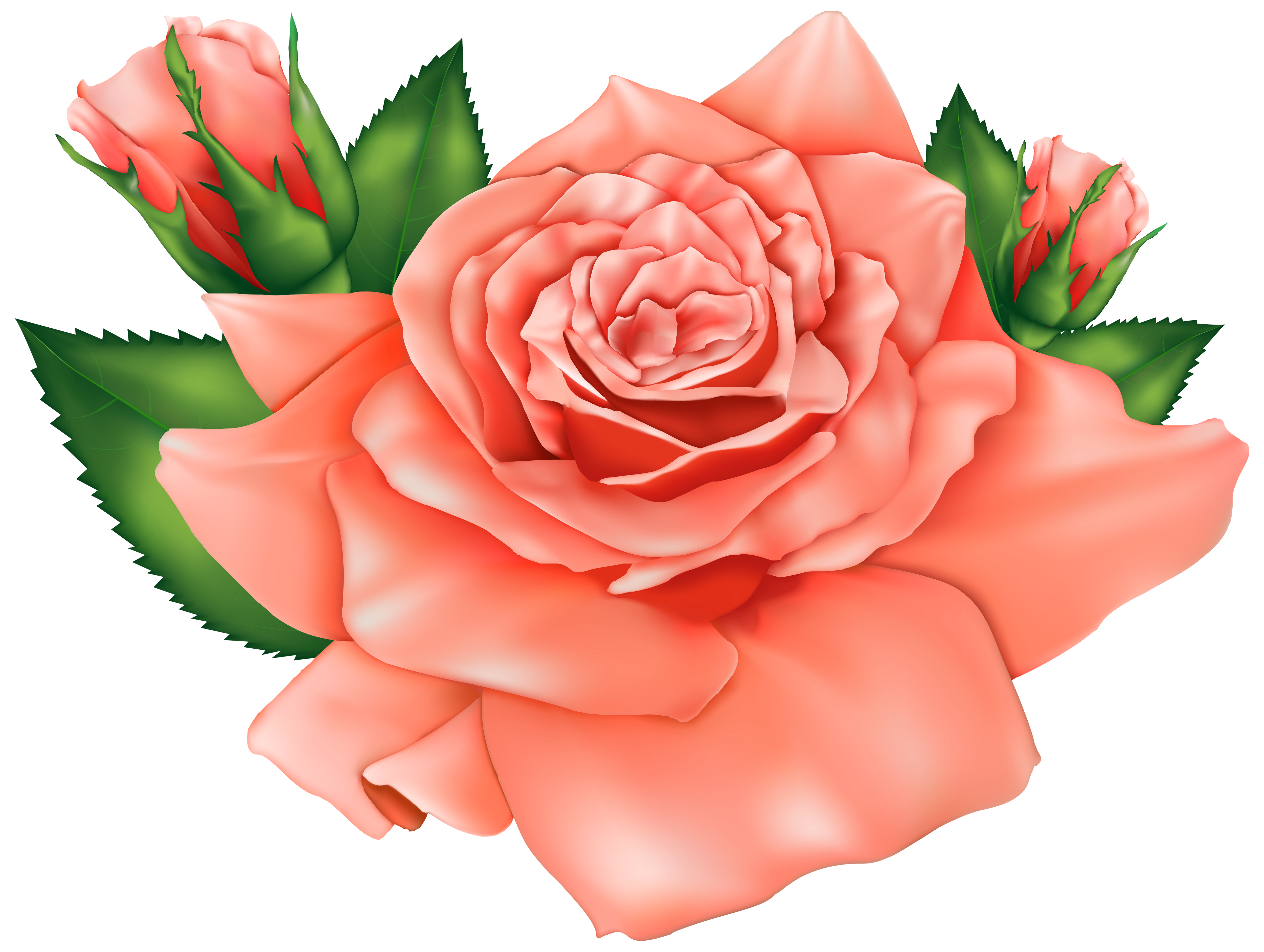 Clipart roses peach rose. Orange png image gallery