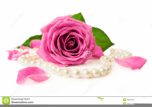 Rose free images at. Clipart roses pearl