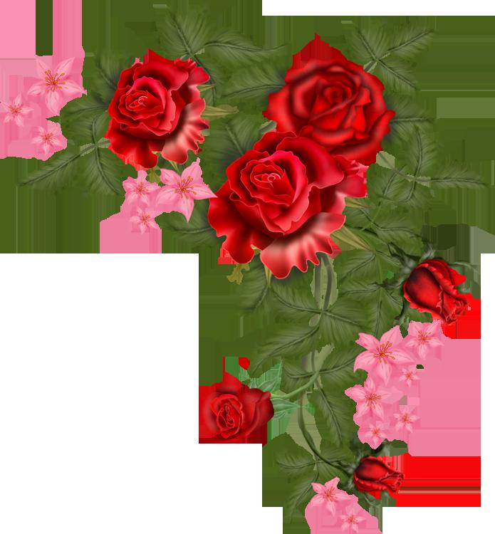 Flowers vector png. Rosa rosas para ti