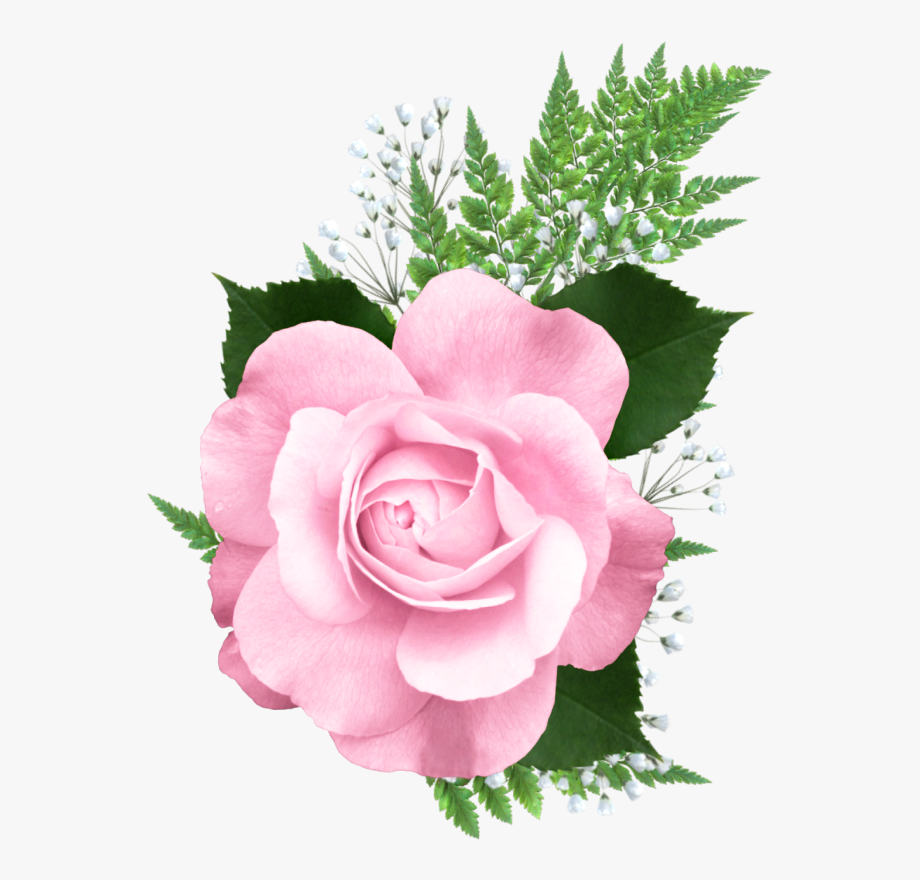 Clipart roses pink rose. Png flower pretty flowers