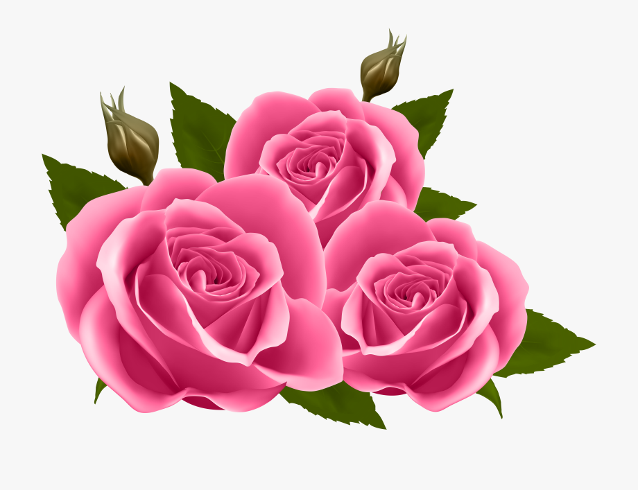Png transparent cliparts . Clipart roses pink rose