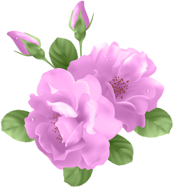 Pink transparent png clip. Clipart roses purple