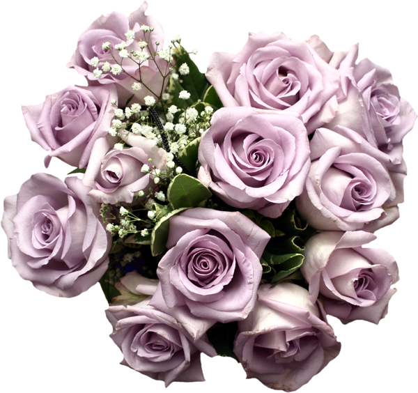 Gallery png . Clipart roses purple