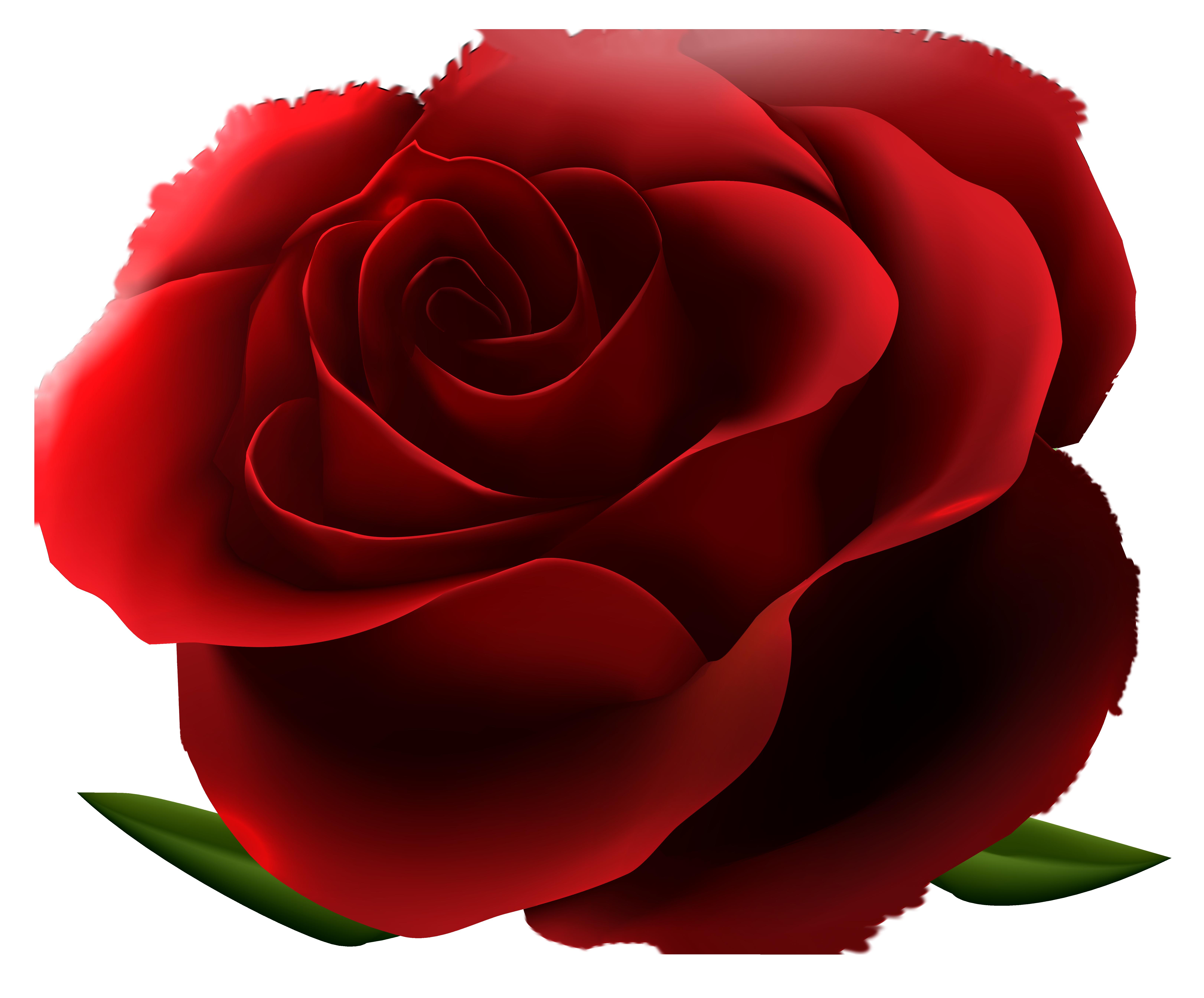 Craft clipart flower. Red rose transparent png