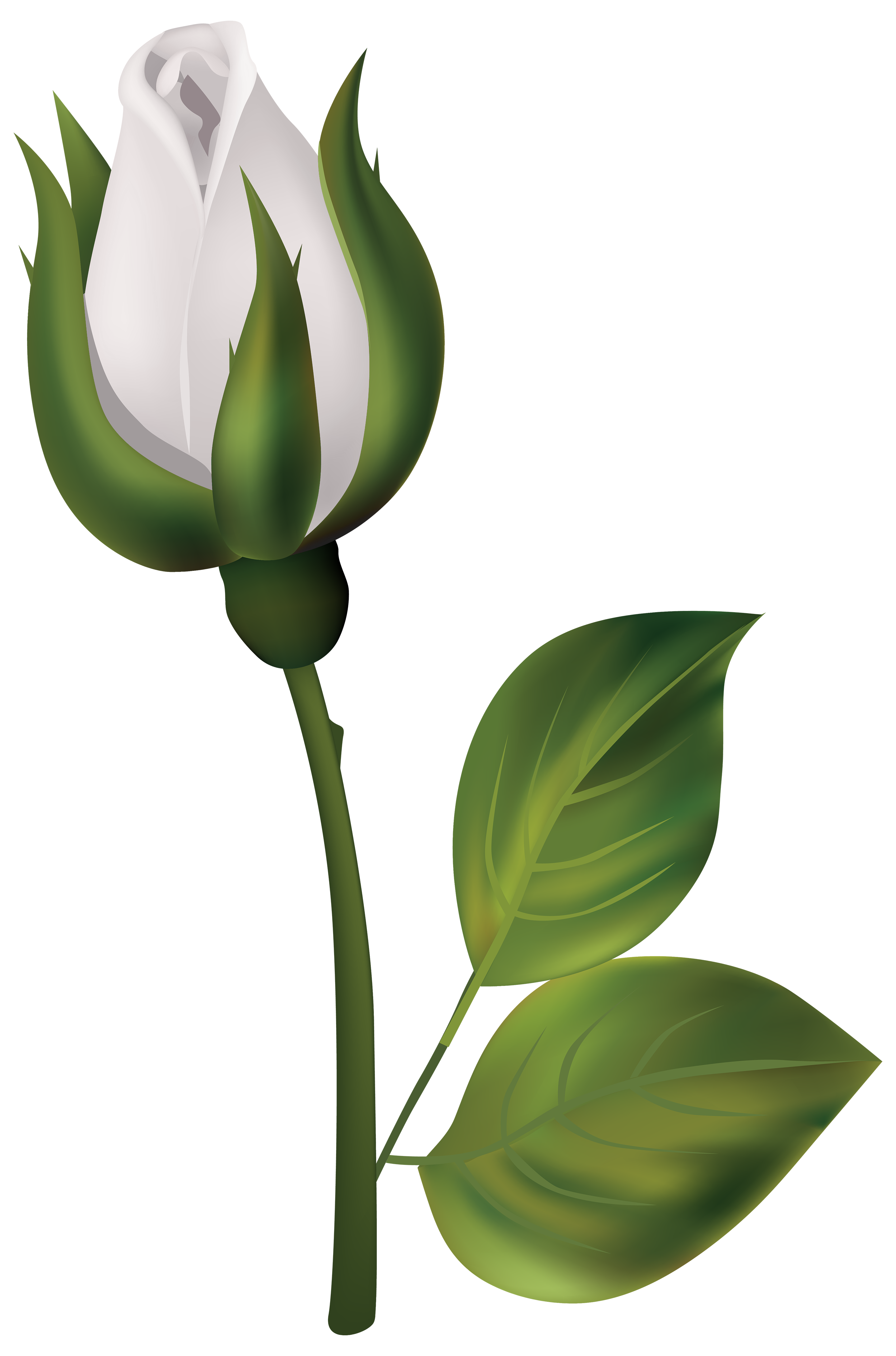 White png best web. Clipart roses rose bud