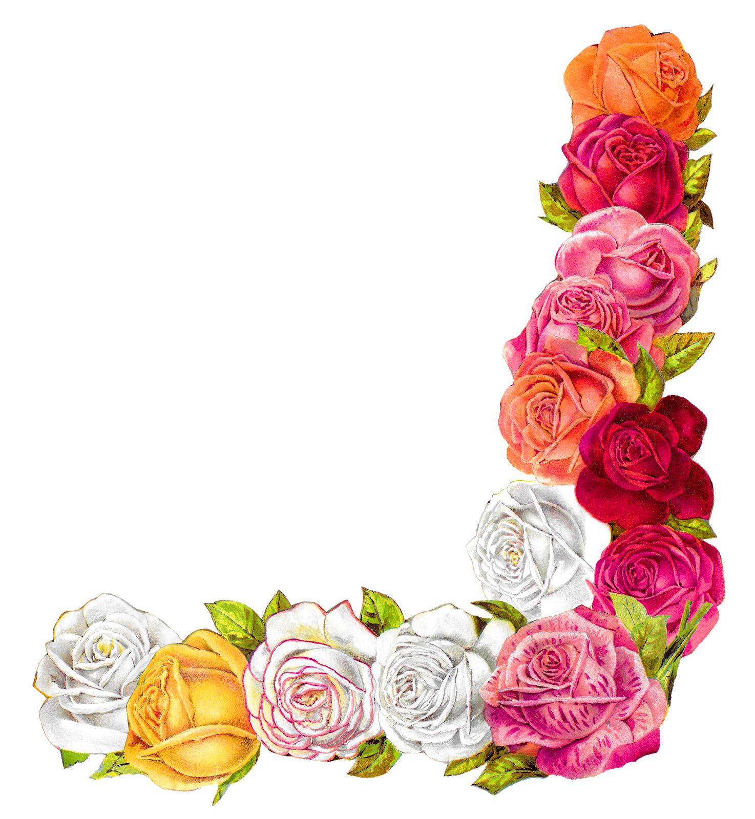 The graphics monarch digital. Clipart roses shabby chic