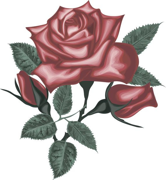 Red vector roses digital. Rose clipart blossom