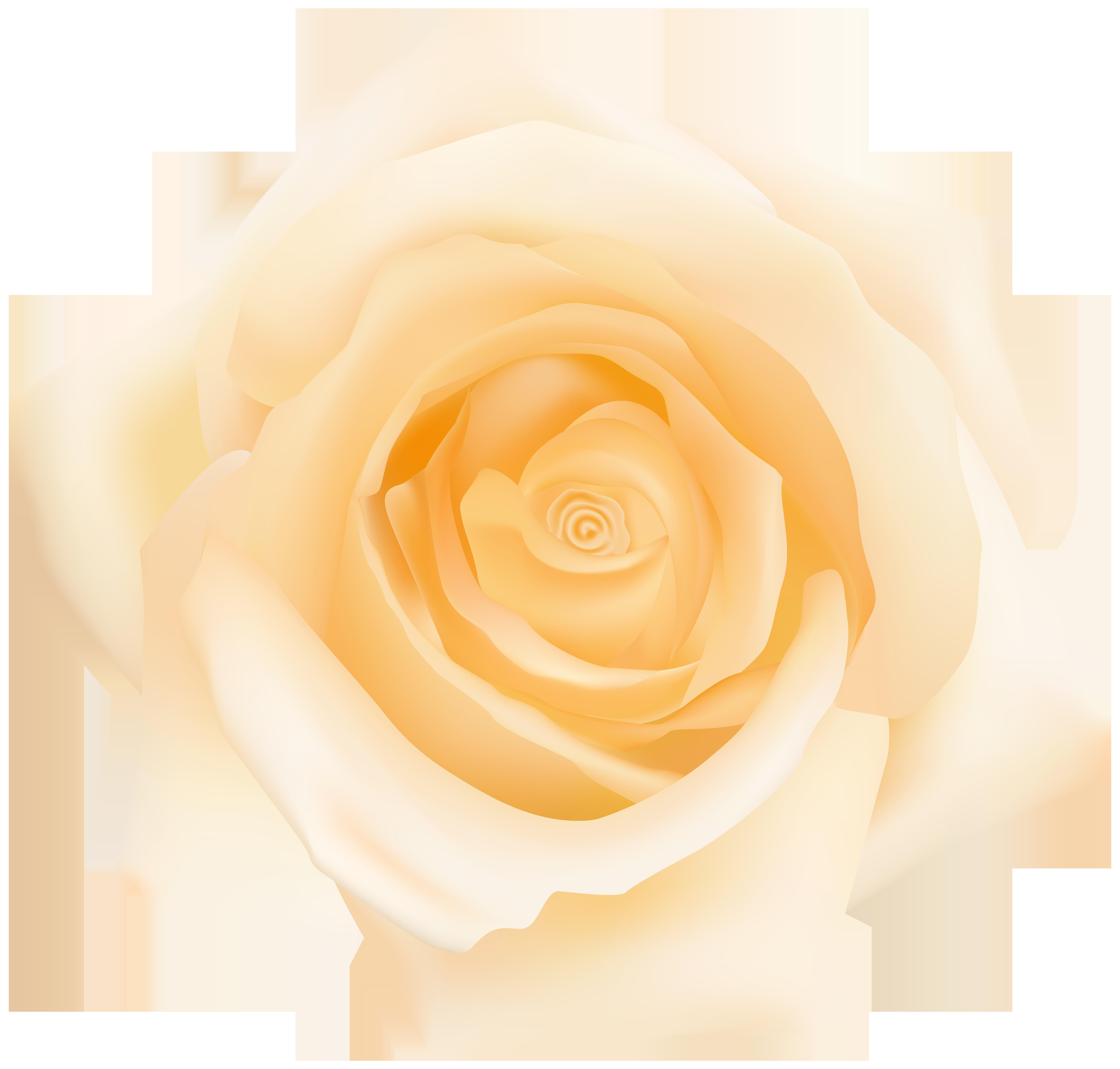 Garden cut flowers petal. Clipart roses yellow rose