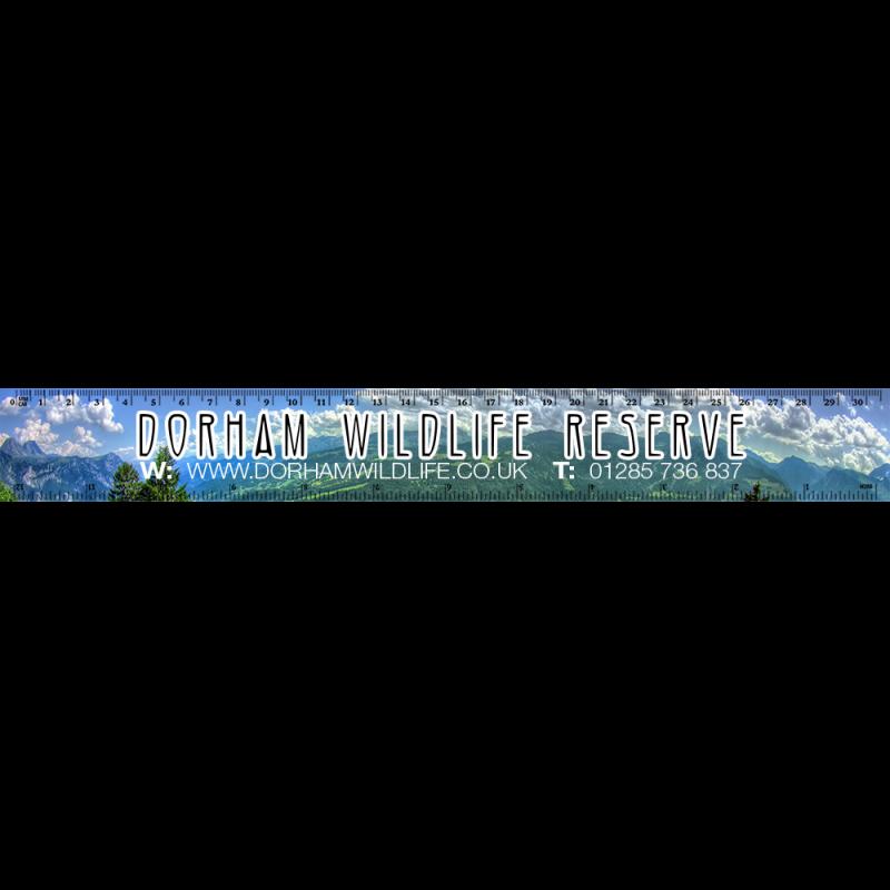 Clipart ruler blank.  cm digitalblanks