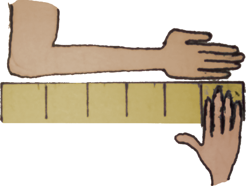 The length of things. Clipart ruler one metre
