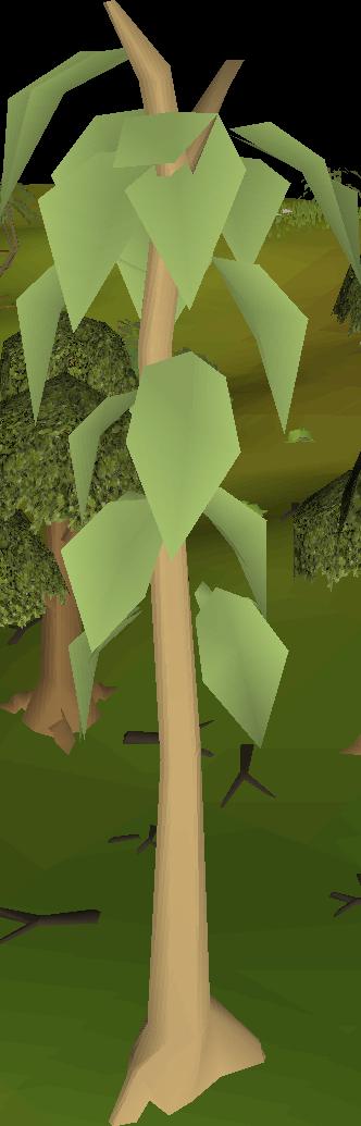 Image teak tree png. Clipart trees school